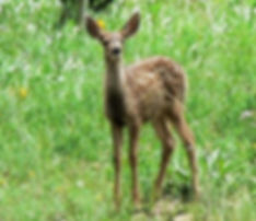 Head up the big Cimarron where wildlife abounds