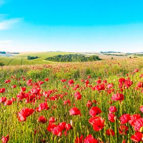 Sussex Poppy Field