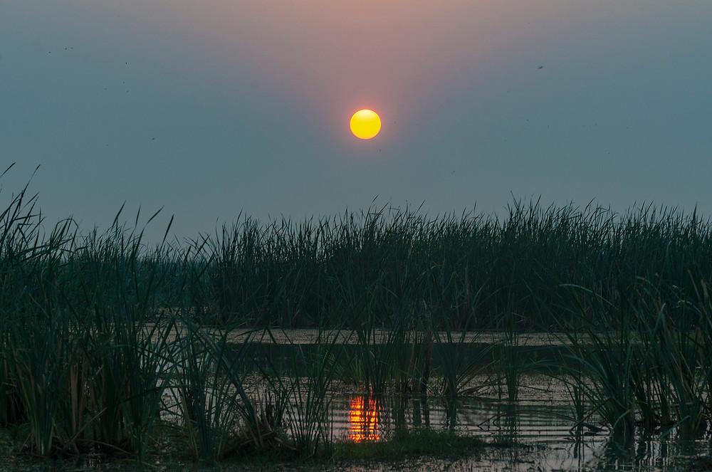 Mangalajodi Sunset
