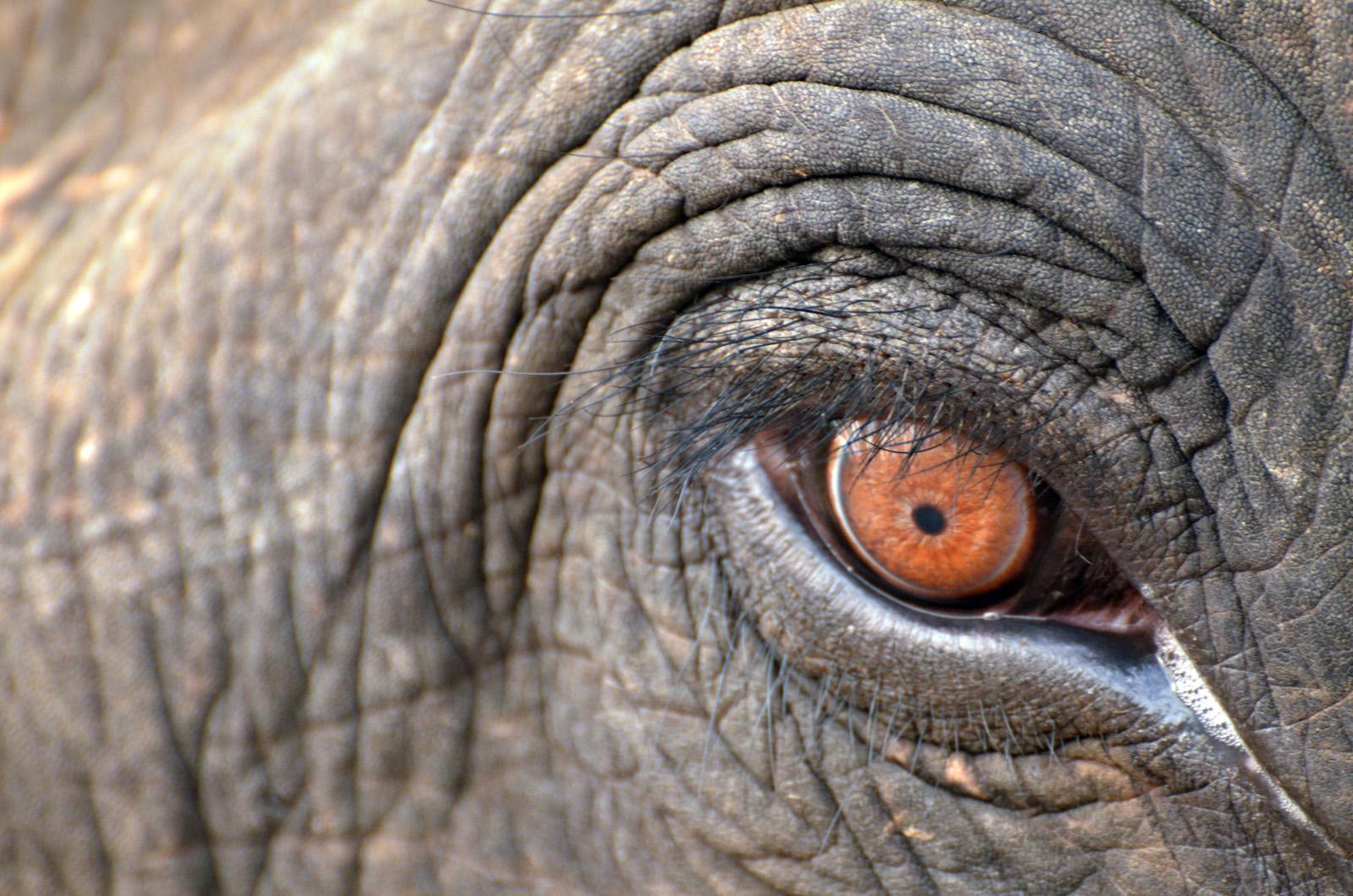 Elephant @dkinwild