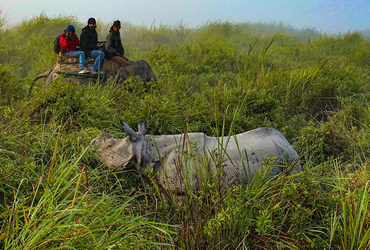 Rhino in Kaziranga @dkinwild