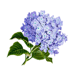 flower-1775377_1280.png