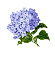 flower-1775377_1280_edited.png