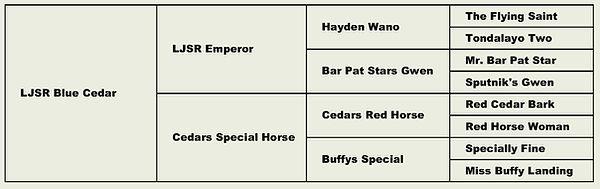 Cedars Special Horse.jpg