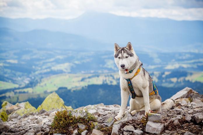 Fotokurs_Husky Trekking