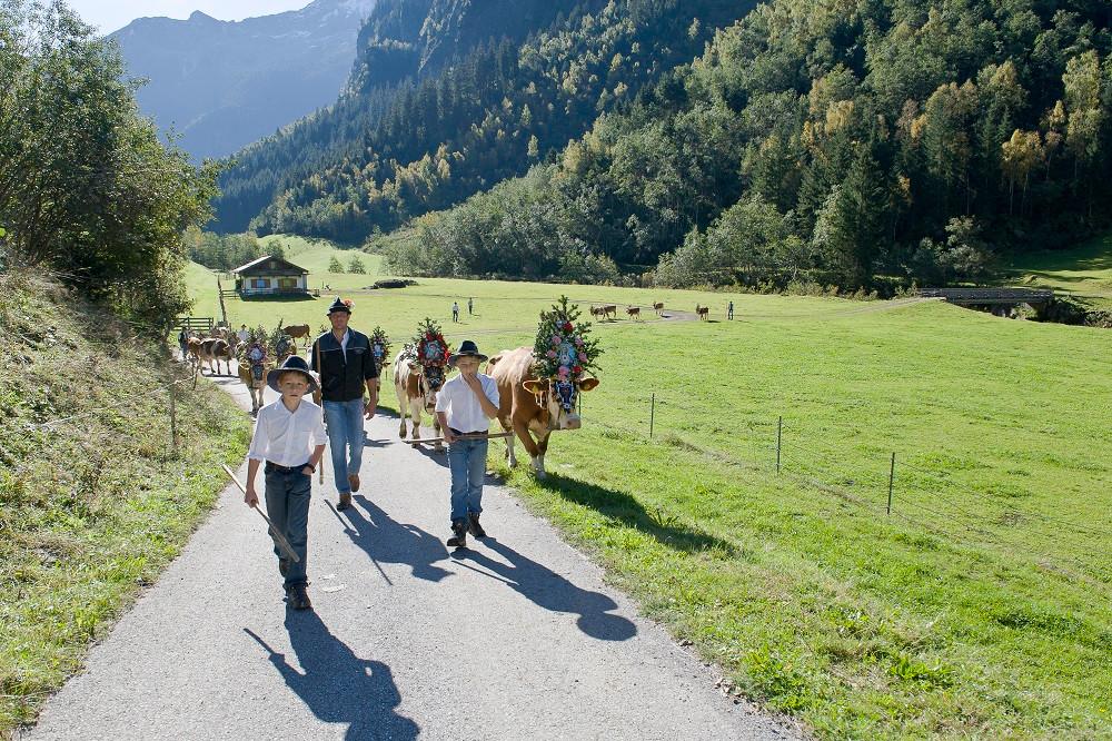 Zillertal_Almabtrieb_Mayrhofen