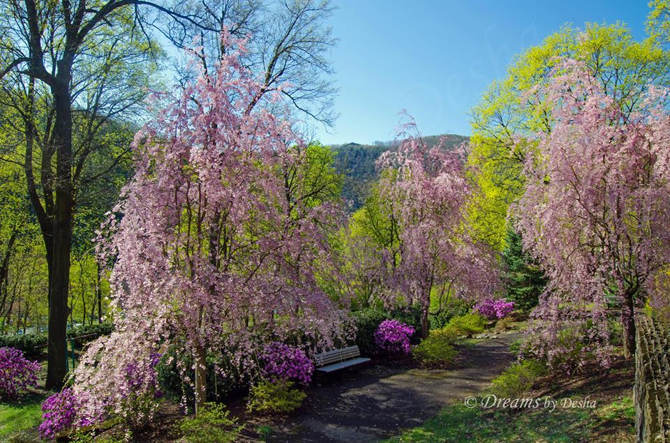 kemmerer park in spring