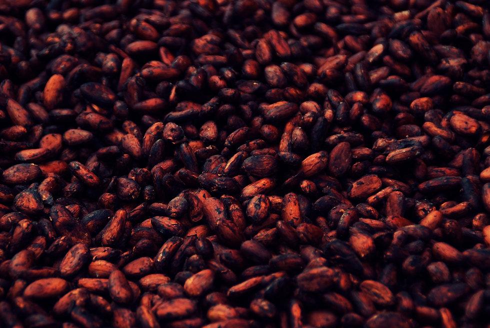 Cacao 8.jpg