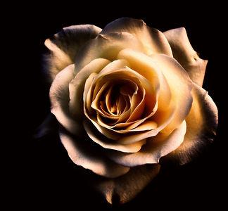 flower-1949242_edited.jpg