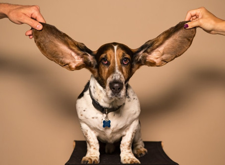 TINNITUS – when your body blows the whistle on you