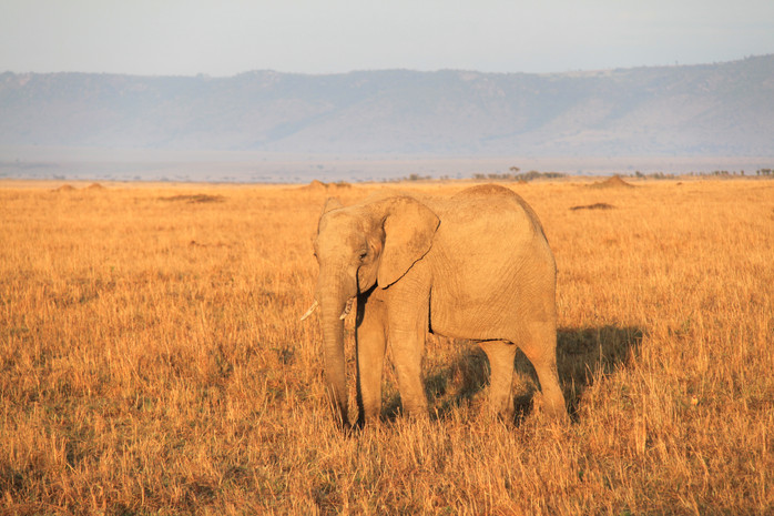 Dreaming of Africa...