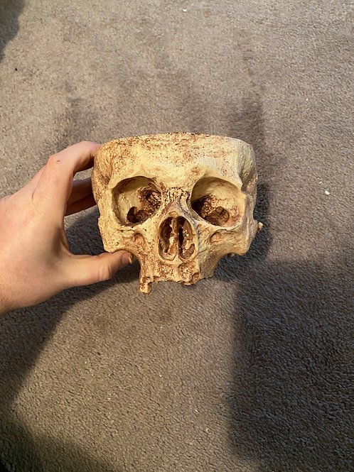 Skull Bowl Decor
