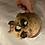 Thumbnail: Skull Wall Mount - 6