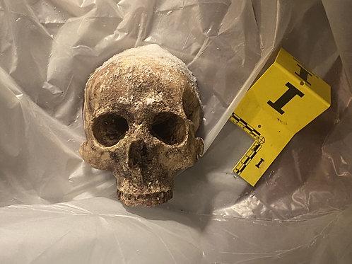 Skull Wall Mount - 2