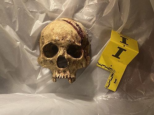 Skull Wall Mount - 6