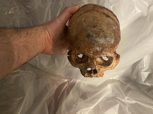 Full Skull (Decayed 2)