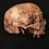 Thumbnail: Hyperrealistic Skull