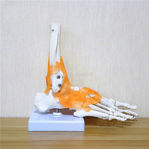 Human Foot Replica