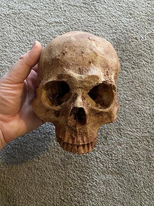 Skull wall Mount