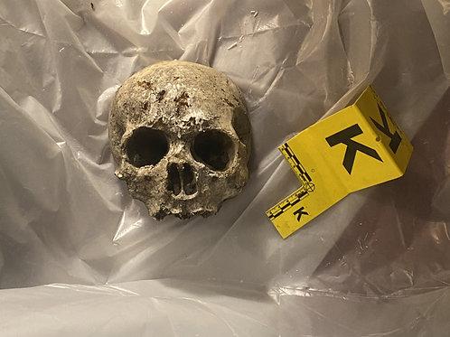 Skull Wall Mount - 5