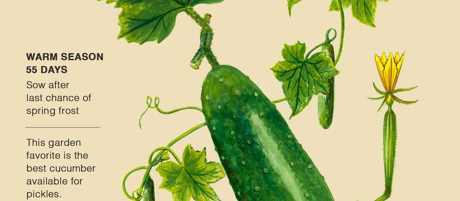 My New Book - The Pickle Story - Now in the National Museum of American History at the Smithsonian