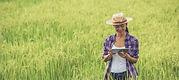 fazendeiro-que-esta-em-um-campo-do-arroz