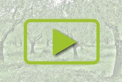 video_umbra