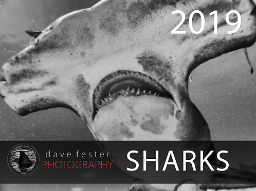 Limited Edition 2019 Shark Calendar - Dave Fester Photography