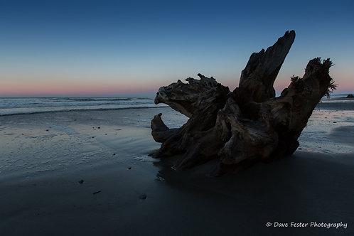 Beach Dragon (WA-06)