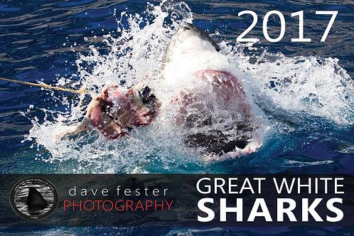 2017 Great White Shark Calendar