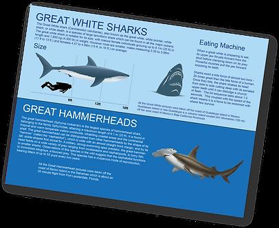 Shark Education.png