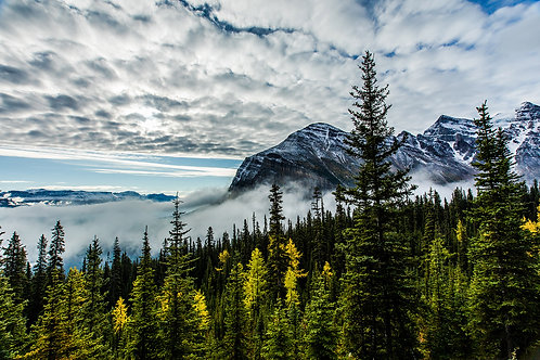 Tree tops, Banff National Park