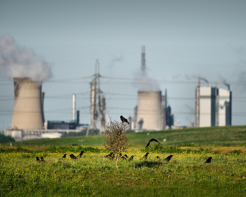 COLOUR - Industrial Crows by Joe Beattie (8 marks)