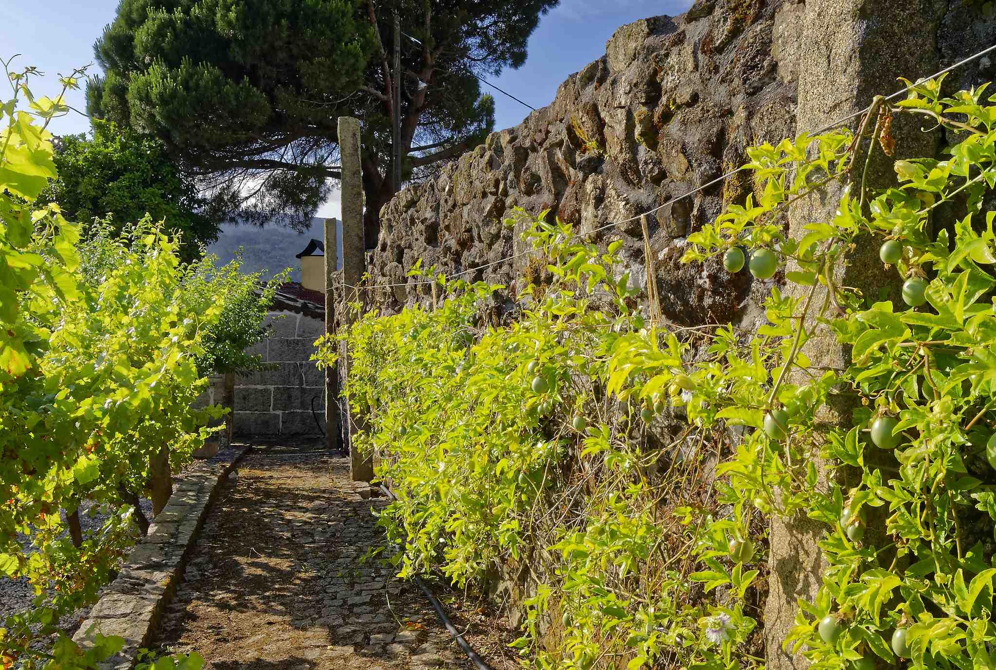 Wall & tree