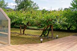 Vine & terrace