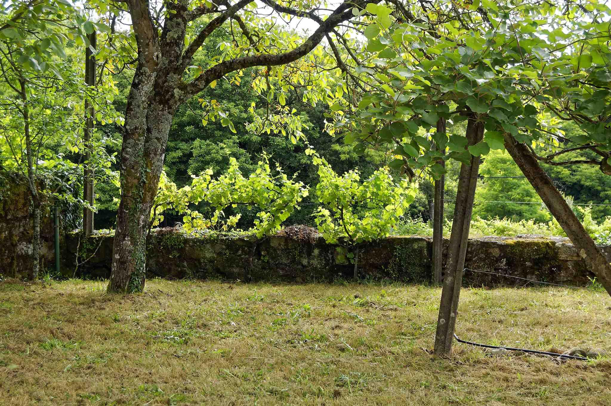 Vine & tree