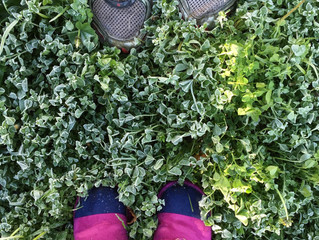 Maintaining Your Lawn in an Unpredictable Winter