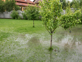 5 Ways to Hurricane-Proof Your Florida Lawn
