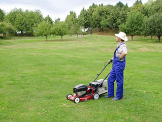 4 Common Lawn Issues and How to Fix Them