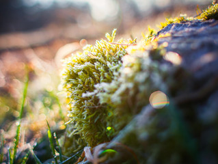 What Happens to Your Lawn when the Temperature Drops?