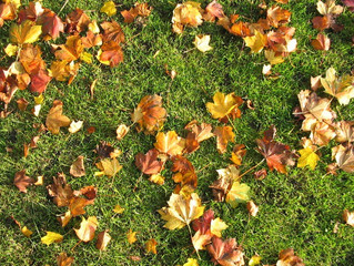 We're Thankful for our Healthy Lawns This November