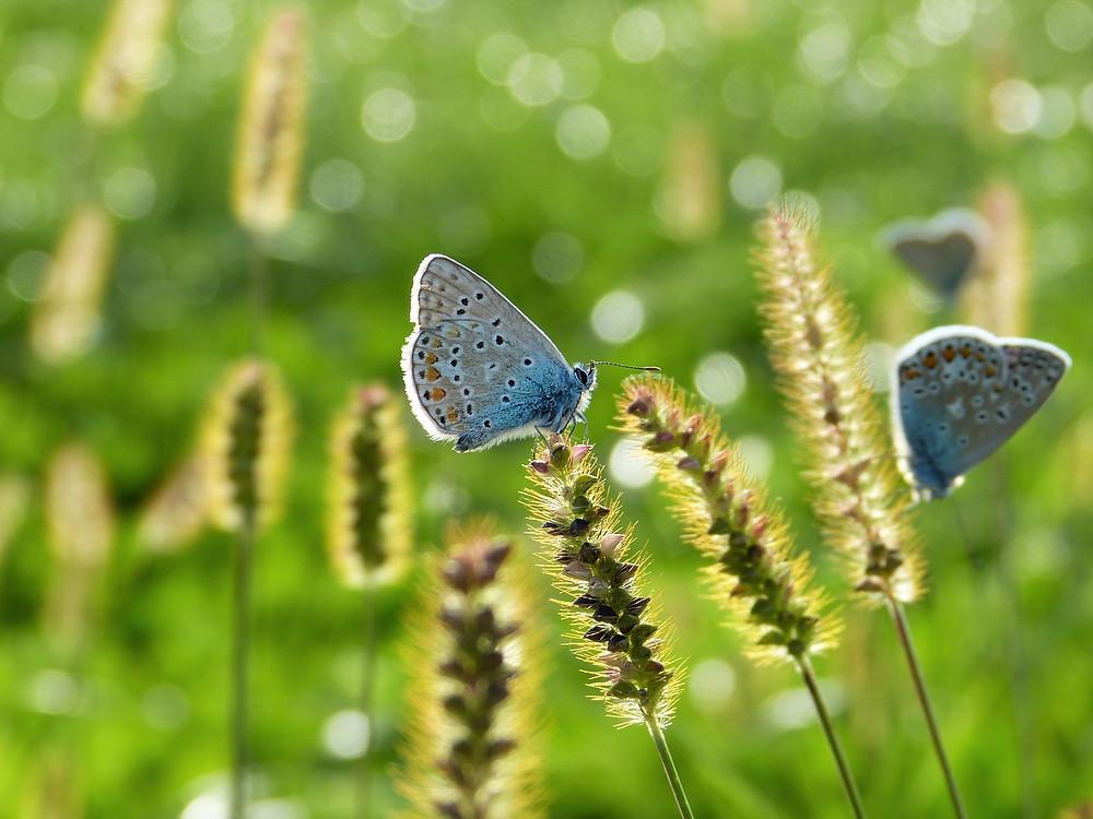 butterflies on grass seed lawn fertilizer