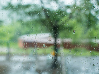 Protecting Your Florida Lawn from Heavy Rains