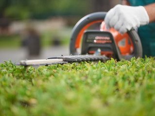 Homeowners: DIY Lawn Care or Landscaping Service?