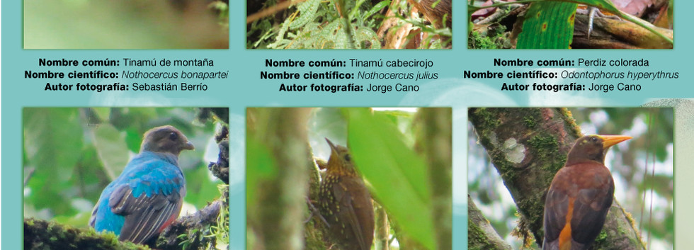 Int-4-Aves.jpg