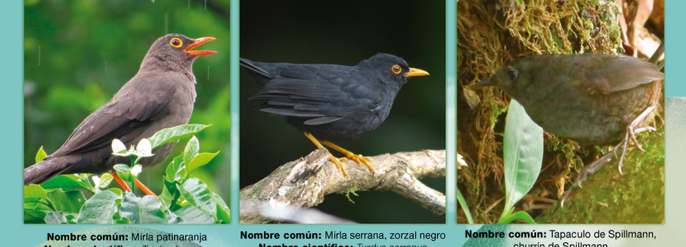 Cambio2.jpg