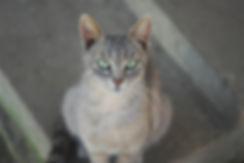 Cat Close Up