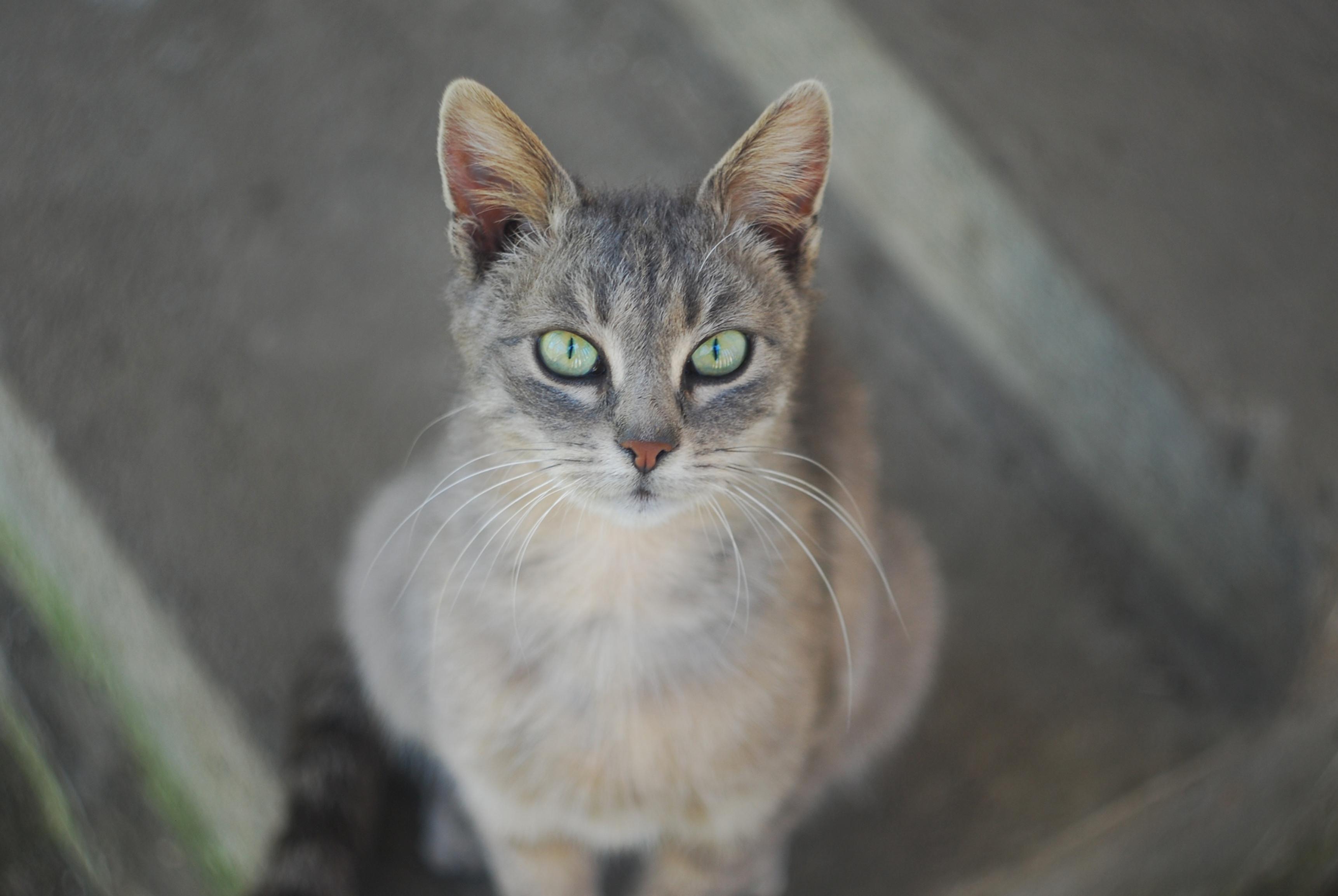 Fritlevende katte