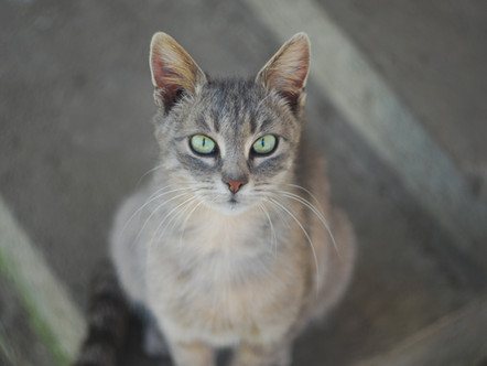 Kelloggs' Story - A Beloved Cat Landfilled Following Hit and Run