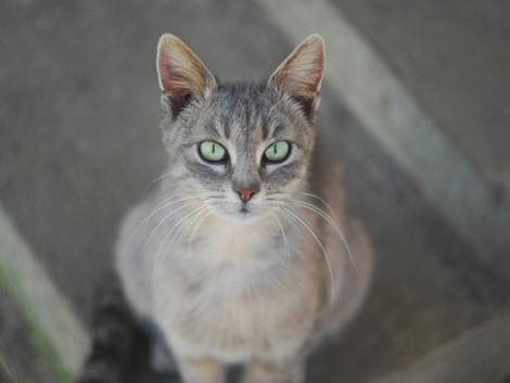 Katzen suchen ihr Zuhause selbst aus